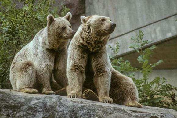 Ausflugsfahrt Zoo Wilhelma